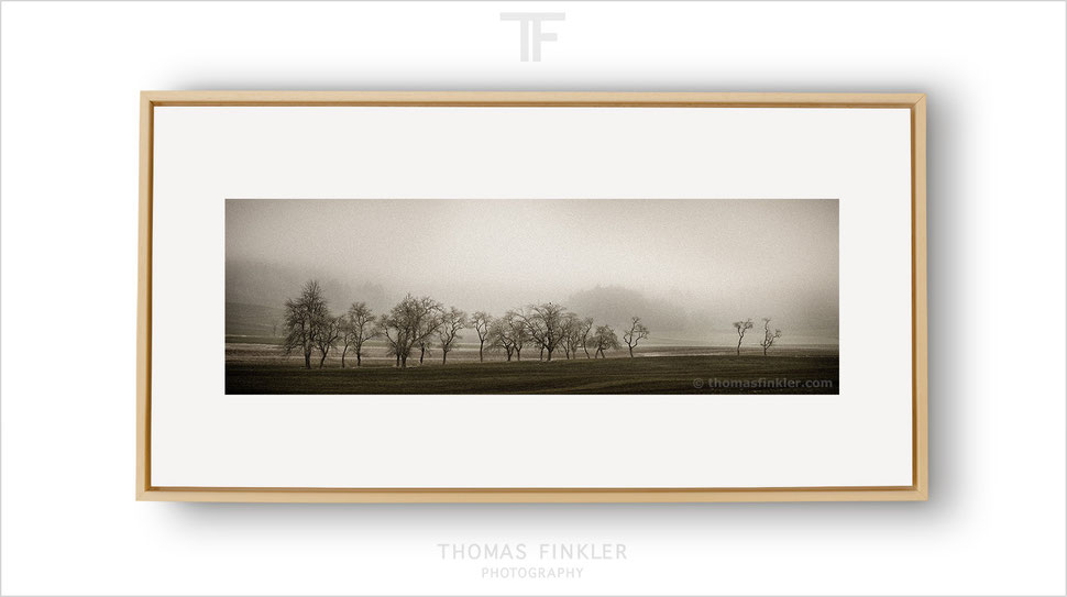 Art, fine art, photography, panoramic, nature, landscape, tree, atmospheric, melancholy, poetic, prints for sale, buy prints, framed