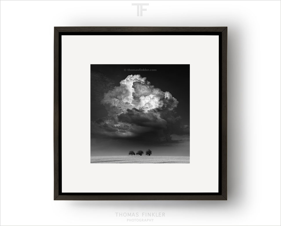 Black and white photography, fine art, monochrome art photography, landscape, minimal, trees, dramatic, framed, prints, for sale