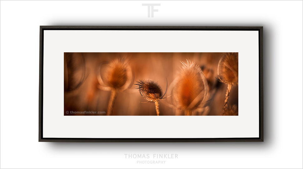 Fine art, photography, panoramic, panorama, nature, flower, floral, autumn, season, mood, moody, poetic, most beautiful, framed