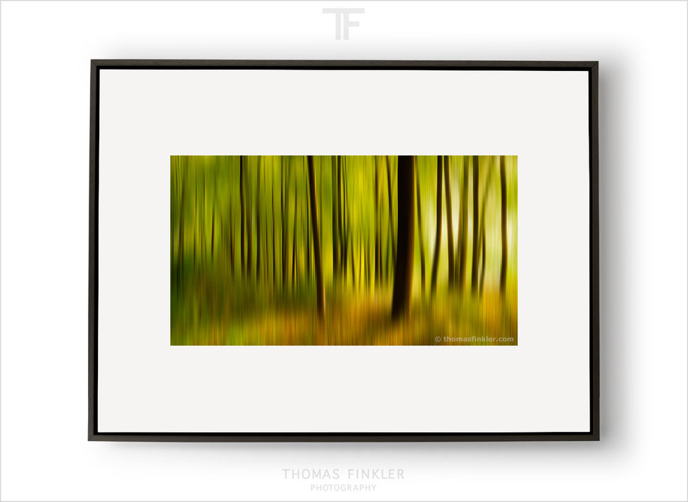 Fine art, photography, abstract, print, tree, nature, trees, forest, most beautiful, impressionist, art, prints for sale, buy prints, online