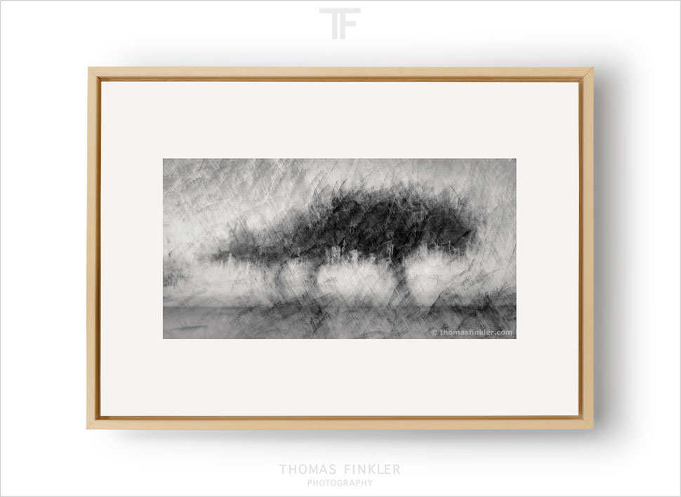Fine art, photography, art photography, photographic art, black and white, monochrome, abstract, tree, nature, limited edition, online