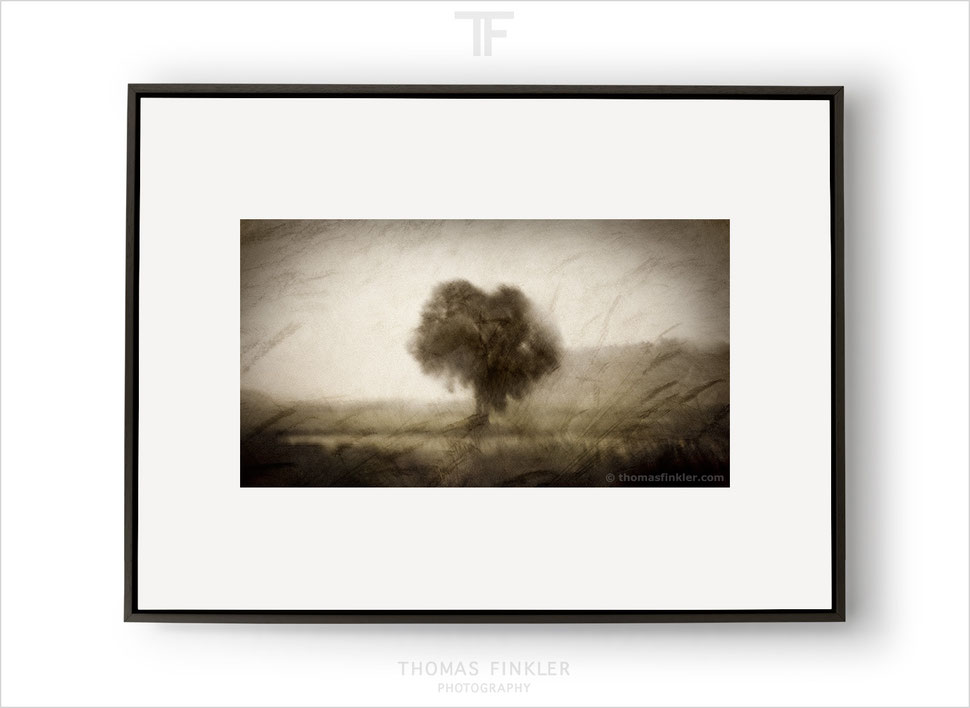 Fine art photography, art photography, photographic art, abstract, tree, nature, atmospheric, impressionist, poetic, tree of life
