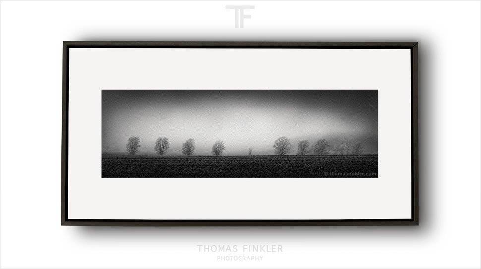 Panoramic, panorama, fine art, photography, print, monochrome, black and white, tree, nature, art, framed, prints for sale, buy prints