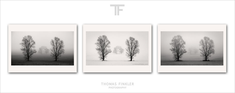 Buy, photography, fine art, black and white, 3 piece wall art, triptych, art, landscape, trees, winter, mist, fog, atmospheric, prints, online