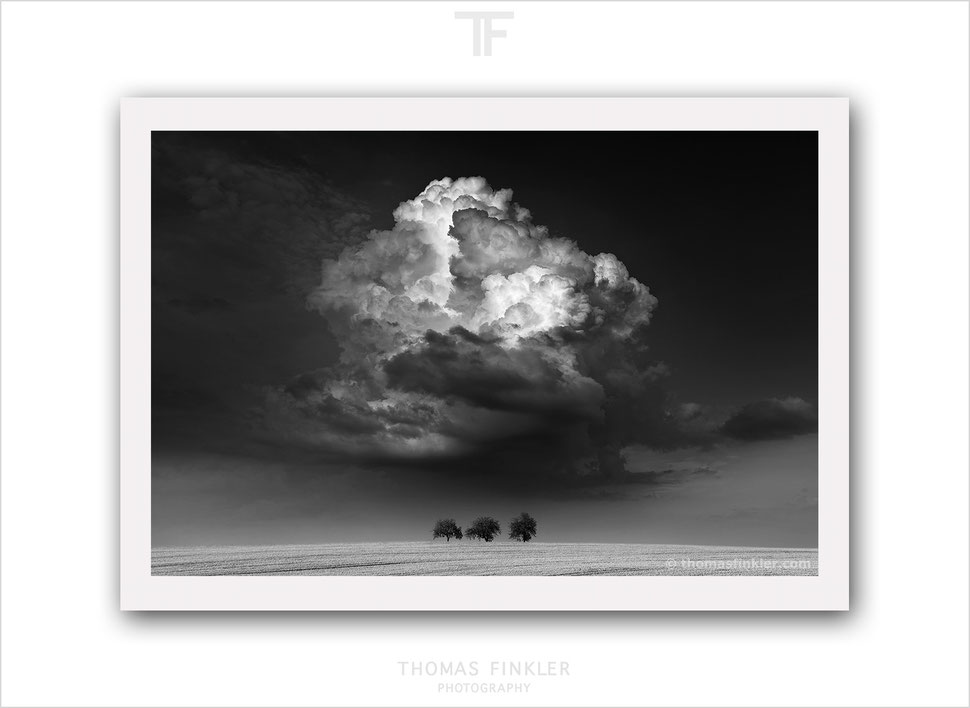 Fine art black and white photography, monochrome art photography, fine art photography, vision, nature, landscape, trees, cloudscape