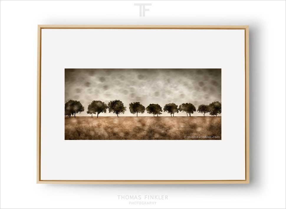 Fine art nature photography, fine art landscape photography, wall art, blurry, rain, trees, color, limited edition, framed, prints, for sale