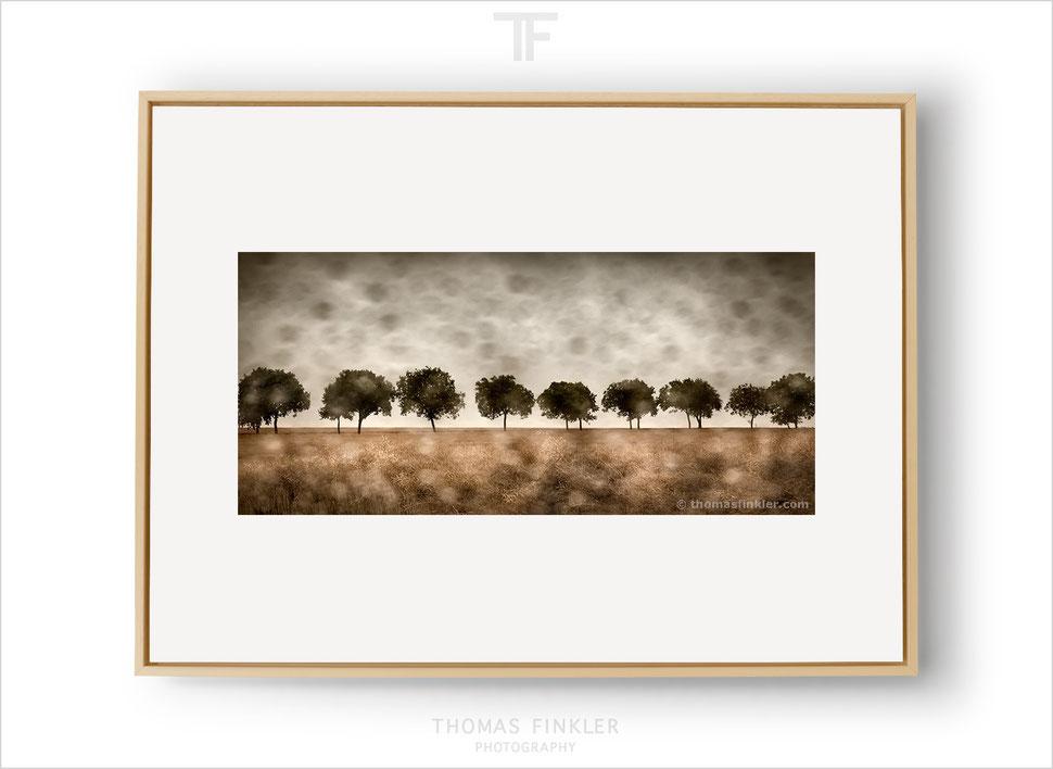 Art, fine art, photography, photographic art, tree, nature, landscape, trees, blurry, rainy, poetic, impressionist, atmospheric, color