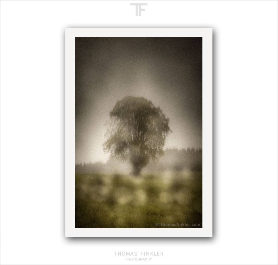 Buy, art, fine art, photography, atmospheric, melancholy, moody, poetic, nature, landscape, tree of life, muted tones, muted colors, prints