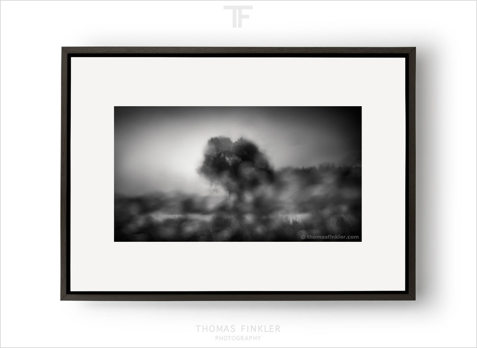 Fine art, photography, print, black and white, abstract, tree, nature, modern, contemporary, art, framed, prints for sale, buy prints, online