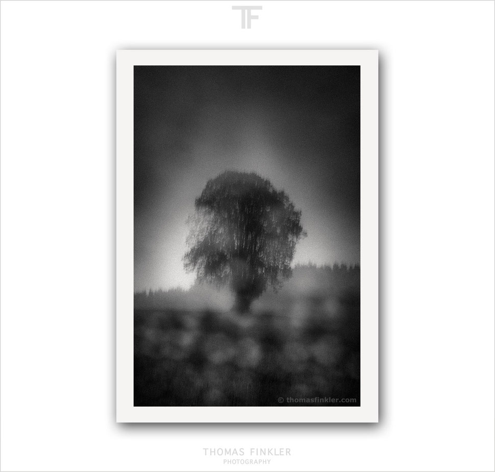 Fine art photography, fine art black and white photography, single tree, solitary tree, nature, art, prints for sale, buy prints, limited edition