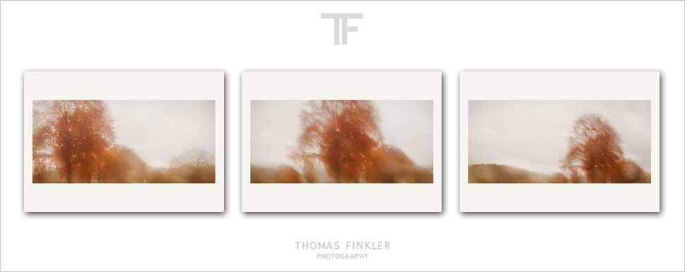 Buy, photography, fine art, 3 piece, wall art, triptych, abstract, nature, trees, rain, atmospheric, poetic, minimal, prints, art, original