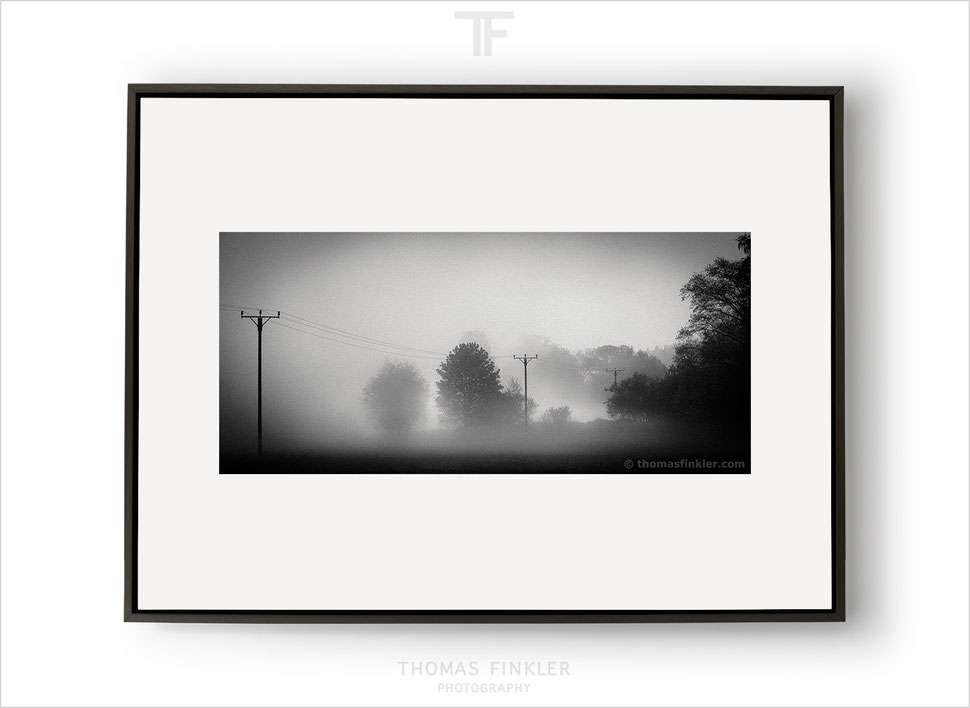 Fine art photography, art photography, photographic art, black and white, monochrome, nature, trees, limited edition, framed, online