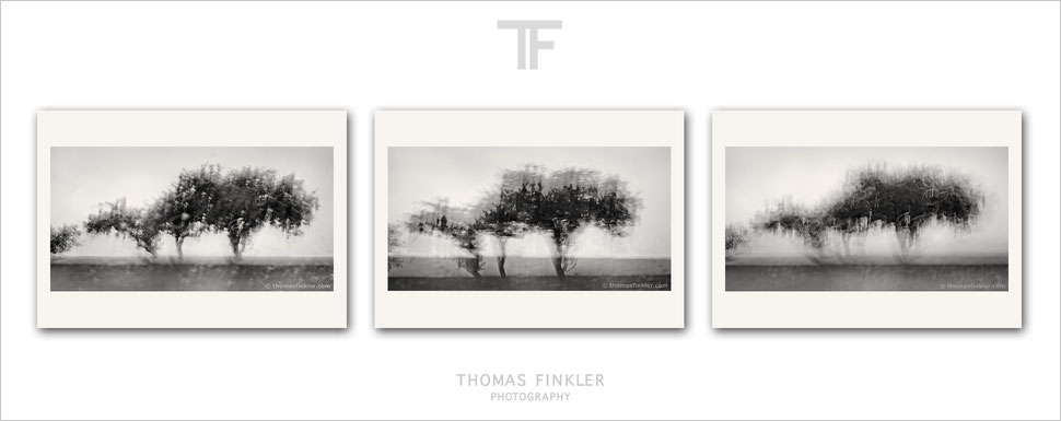 Buy, photography, fine art, monochrome, 3 piece wall art, triptych, abstract, nature, trees, prints, art, archival, online, limited edition
