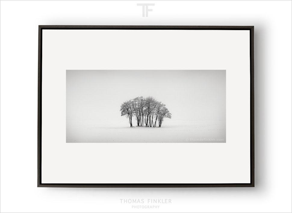 Fine art, art, photography, black and white, monochrome, minimal, minimalist, snow, winter, tree, nature, landscape, limited edition, online