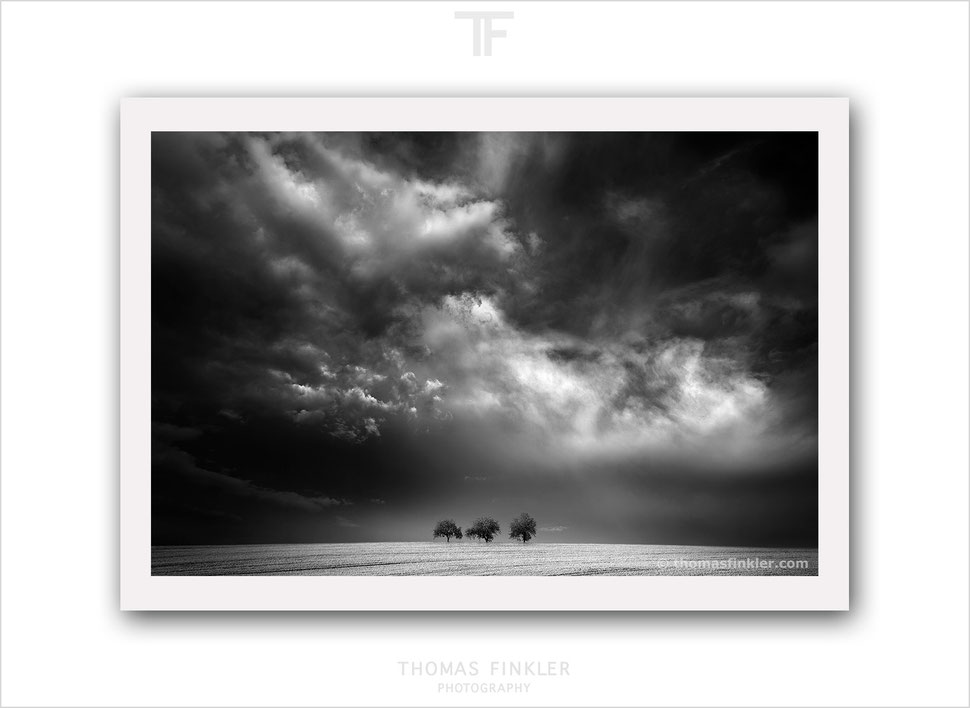 Buy, photography, black and white, fine art, nature, landscape, cloudscape, trees, art, best, high end, high quality, archival, prints, online