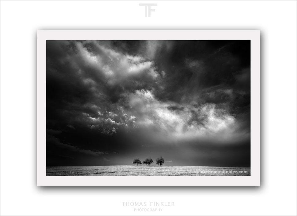 Fine art, photography, black and white, monochrome, sky, cloud, cloudscape, weather, tree, nature, landscape, print, prints, limited edition