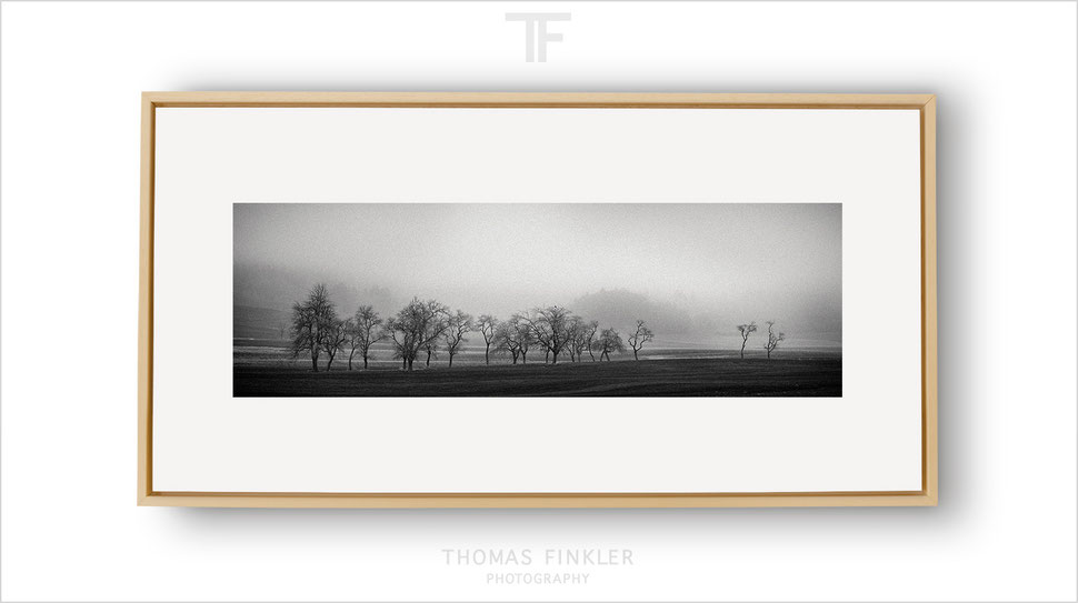 Photography, black and white, fine art, wall art, panoramic, panorama, nature, landscape, trees, fog, mist, framed, prints, for sale