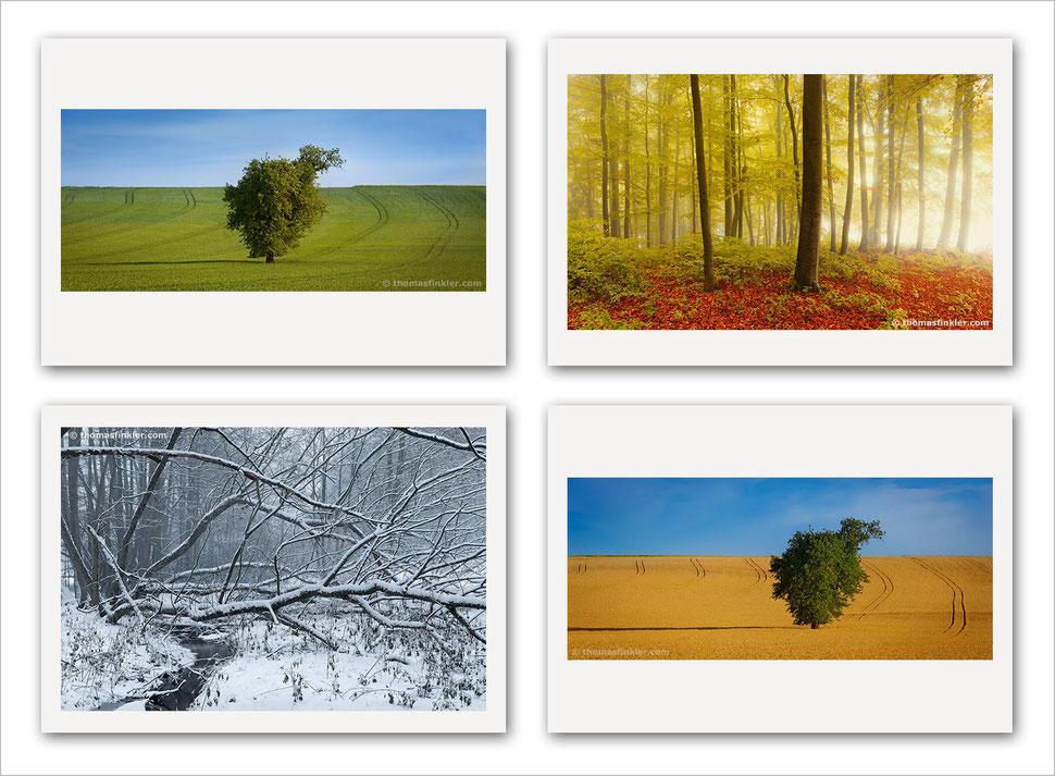 Fine art, photography, art photography, photographic art, tree, nature, trees, award winning, photographer, artist, german, germany