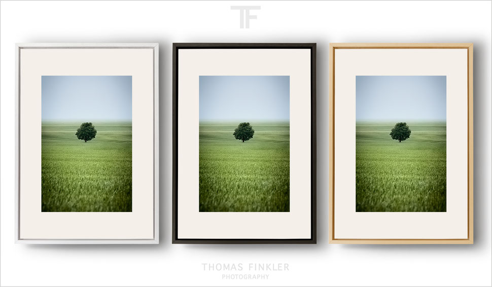Fine art nature photography, fine art landscape photography, wall art, tree, minimalist, springtime, green, fields, framed, prints, for sale