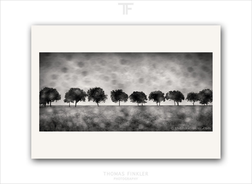 Art photography, photographic art, monochrome, fine art, nature, vision, row of trees, blurry, rainy, limited edition, prints, for sale