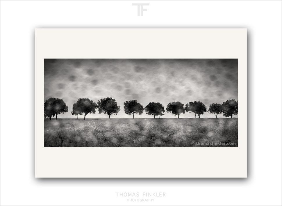 Fine art, photography, print, monochrome, tree, nature, landscape, trees, blurry, rainy day, atmospheric, art, prints for sale, buy prints