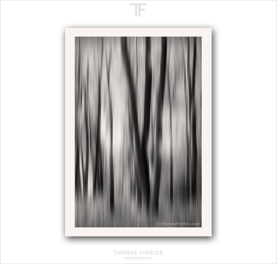Buy, photography, black and white, fine art, abstract nature, abstract forest, trees, modern, contemporary, archival, high quality, prints