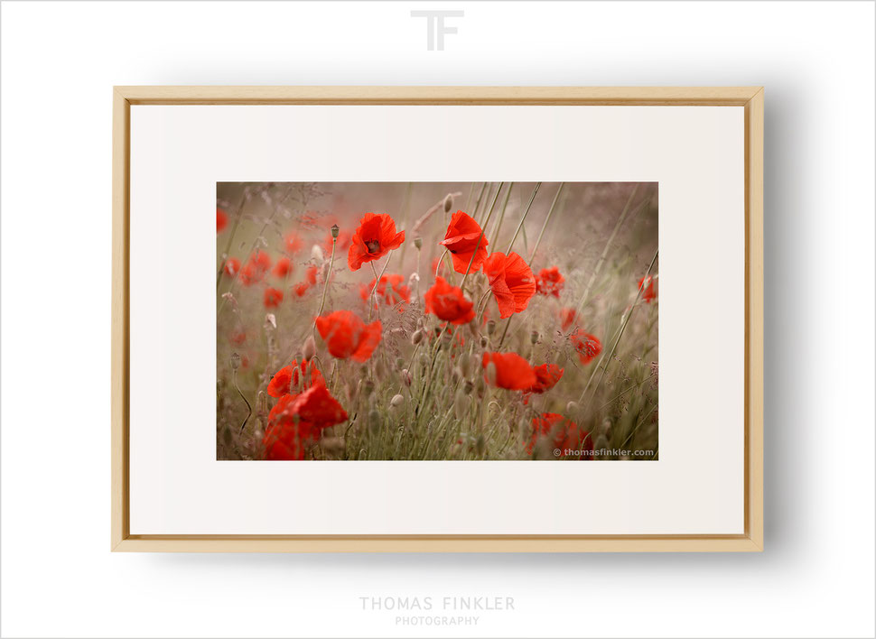 Photography, fine art, wall art, color, colour, flower, floral, poppy blossom, red, poetic, beautiful, limited edition, framed, prints, for sale