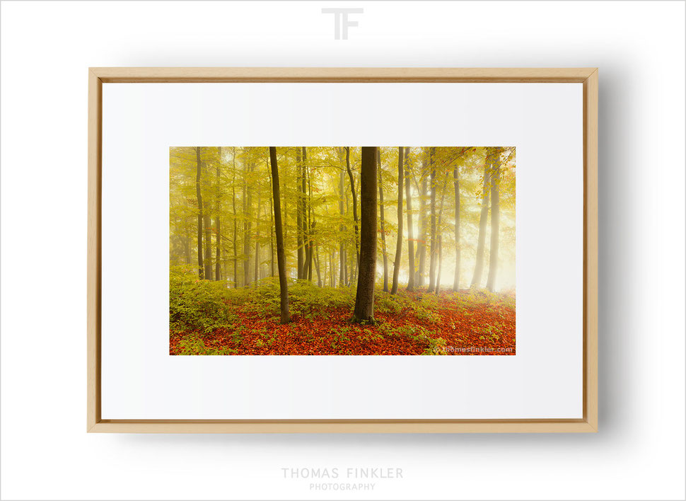 Buy, fine art, photography, nature, trees, forest, woodlands, most beautiful, color, colour, limited edition, art, prints, framed, online