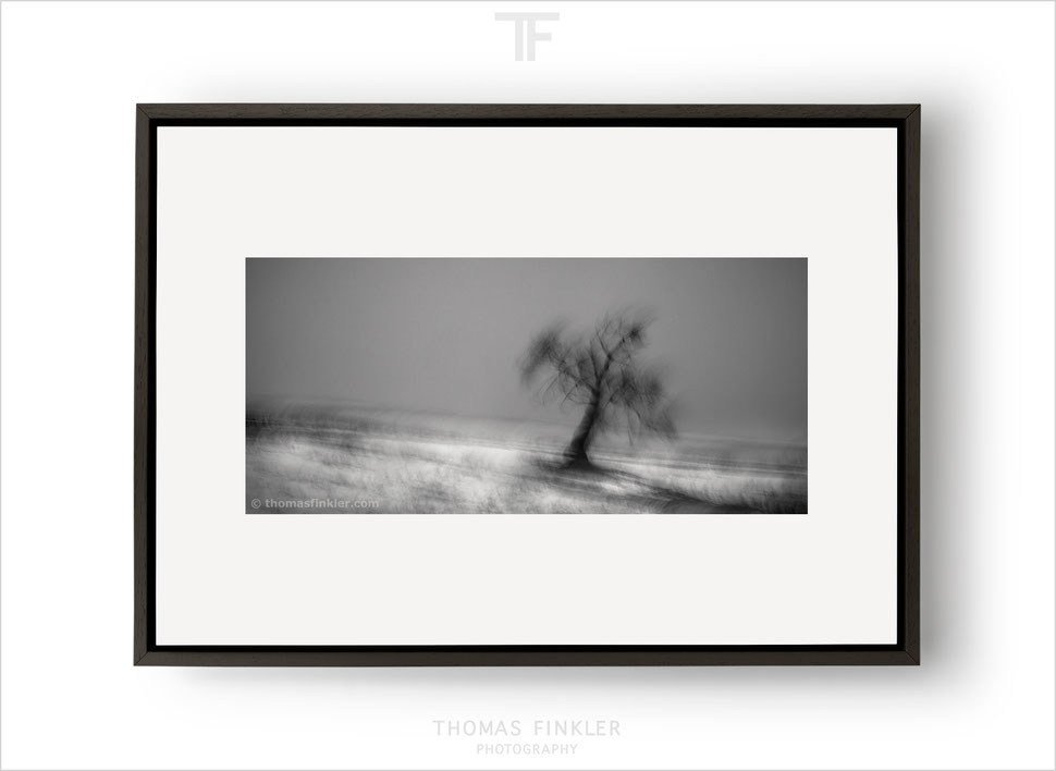 Fine art, photography, art photography, photographic art, black and white, monochrome, tree, nature, trees, limited edition, online