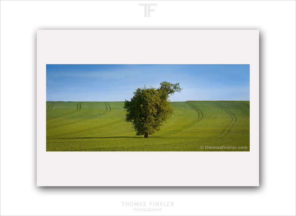 Fine art, photography, prints, nature, landscape, single tree, green, minimal, minimalist, limited edition, art, print for sale, buy print, online