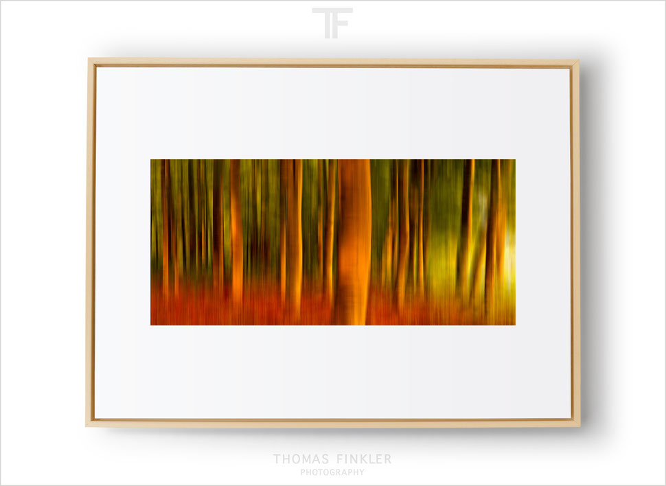 Fine art photography prints, wall art, abstract nature photography, original framed fine art photography by Thomas Finkler for sale