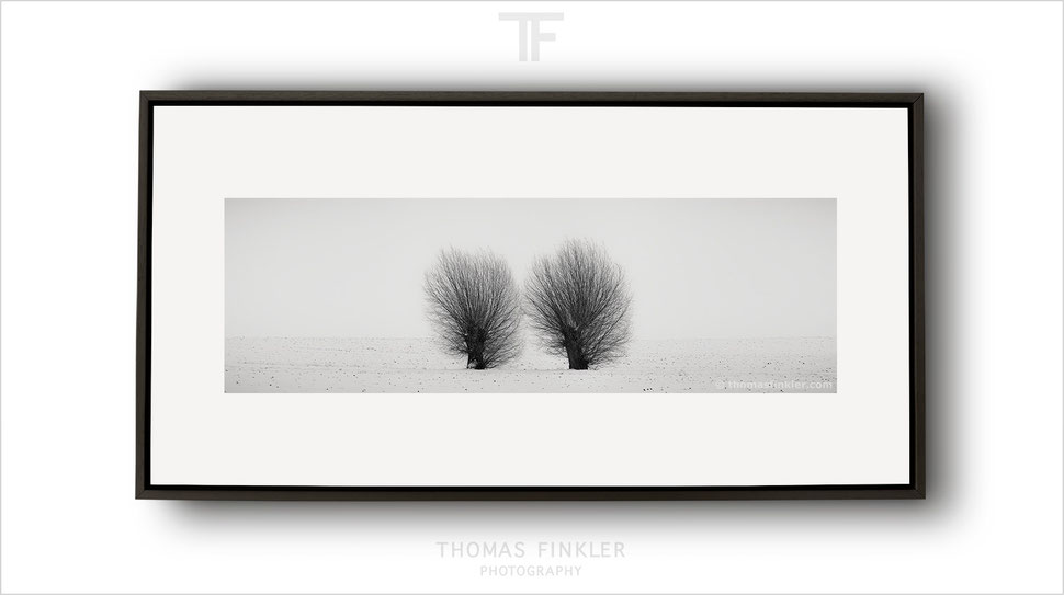 Panoramic, panorama, fine art, photography, print, monochrome, black and white, tree, trees, art, framed, prints for sale, buy prints