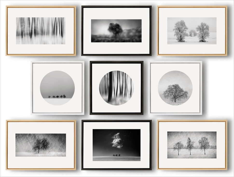 Tree, fine art, art, photography, series, black and white, monochrome, nature, trees, prints, print, framed, limited edition, online