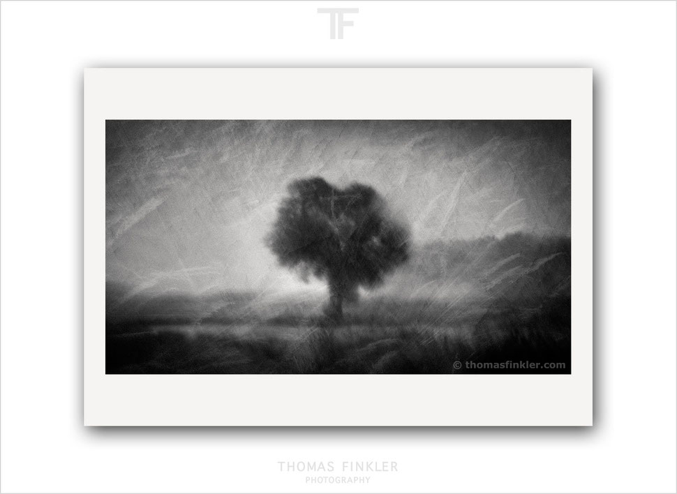 Limited edition, fine art photography, fine art black and white photography, abstract, tree, nature, trees, art, prints for sale, buy prints