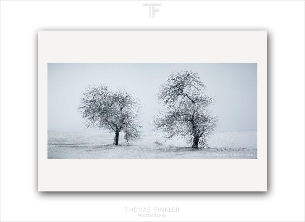 Fine art photography, fine art print, buy fine art prints, fine art prints for sale, nature, landscape, trees, winter, snow, color, colour, art