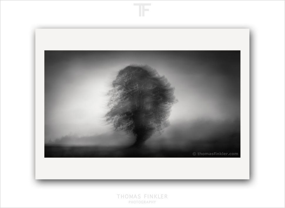 Fine art, photography, print, black and white, monochrome, tree, atmospheric, abstract, nature, trees, art, prints for sale, buy prints, online