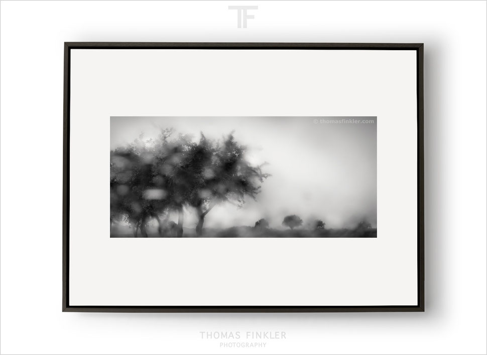 Fine art, photography, print, black and white, tree, abstract, nature, impressionist, poetic, atmospheric, art, prints for sale, buy prints