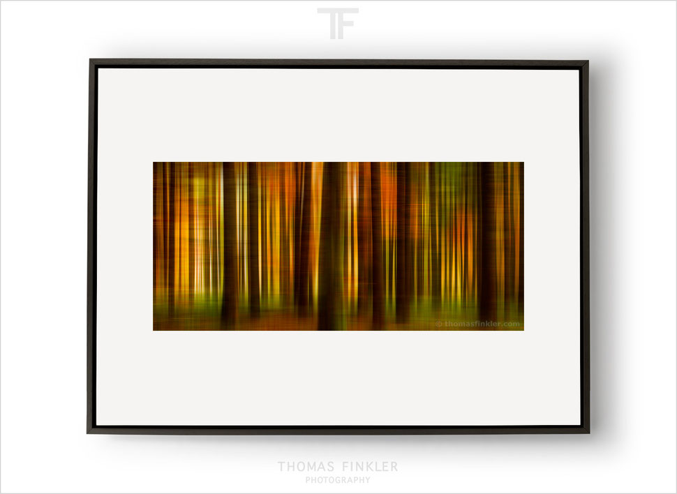 Art, fine art, abstract, photography, print, nature, trees, forest, woodland, impressionist, color, colour, framed, prints for sale, buy prints