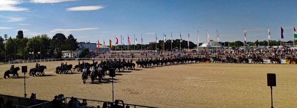 """05.07.2019: Auf der Messe """"Equitana Open-Air"""" in Mannheim, Weltrekord einer Quadrille mit 132 Friesenpferden! :-)"""