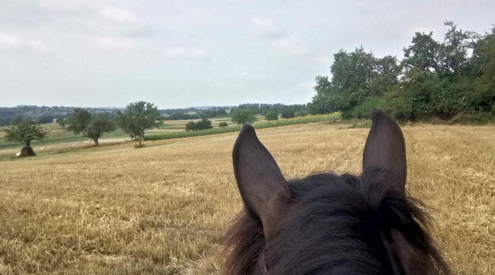 Willi-Ohren am Stoppel- und Sonnenblumenfeld mit Blick auf Stupferich
