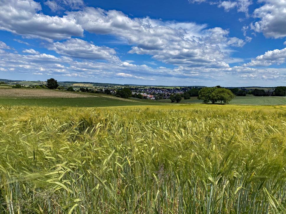 Blick über die Felder nach Jöhlingen