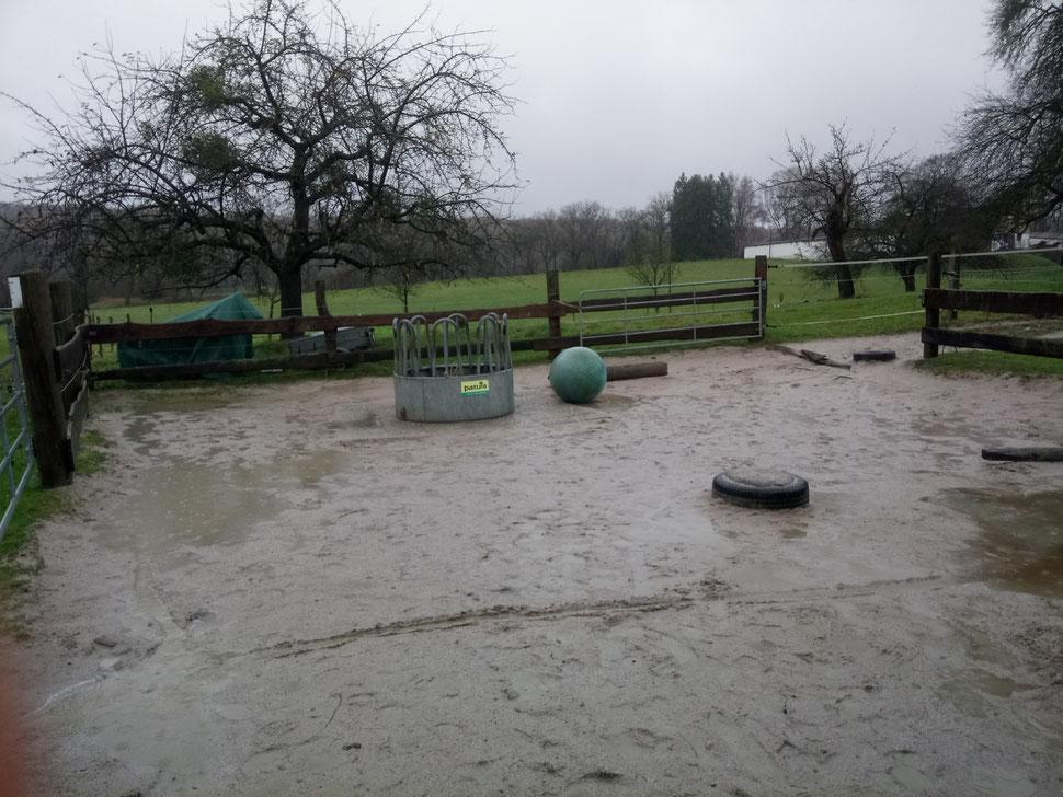Trotz Regen von fast 20 l/qm in 12 Stunden ist der Paddock weitgehend trocken