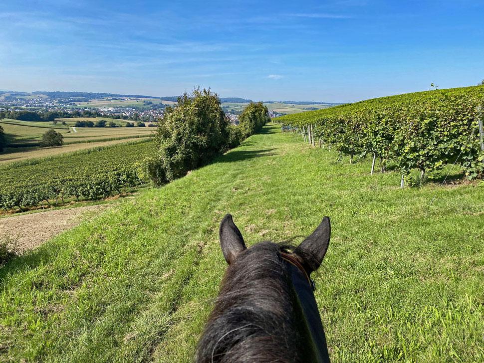 Reiterwetter! Toller Blick von den Weinbergen aus über Heidelsheim.