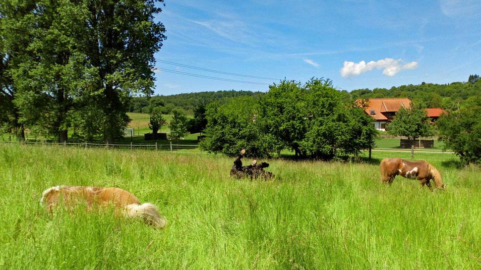 *plumps* Da sind zwei Pferde umgefallen. ;-)