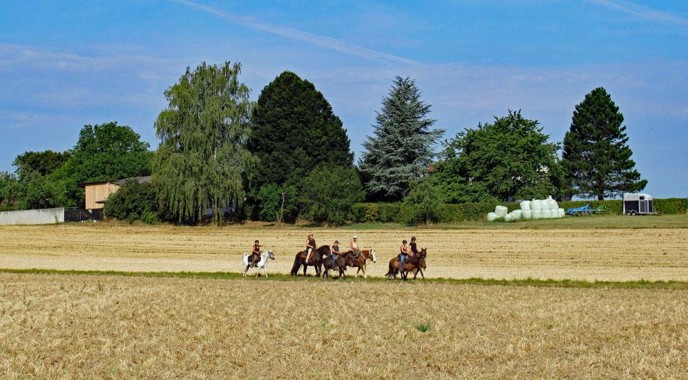 Zwischen den Feldern bei Ötisheim