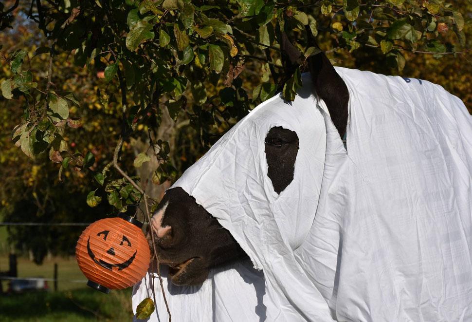 Kurti - Halloween 2017