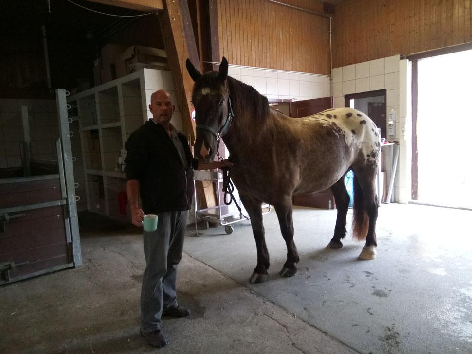 In der Pferdeklinik Salzhofen in Bretten