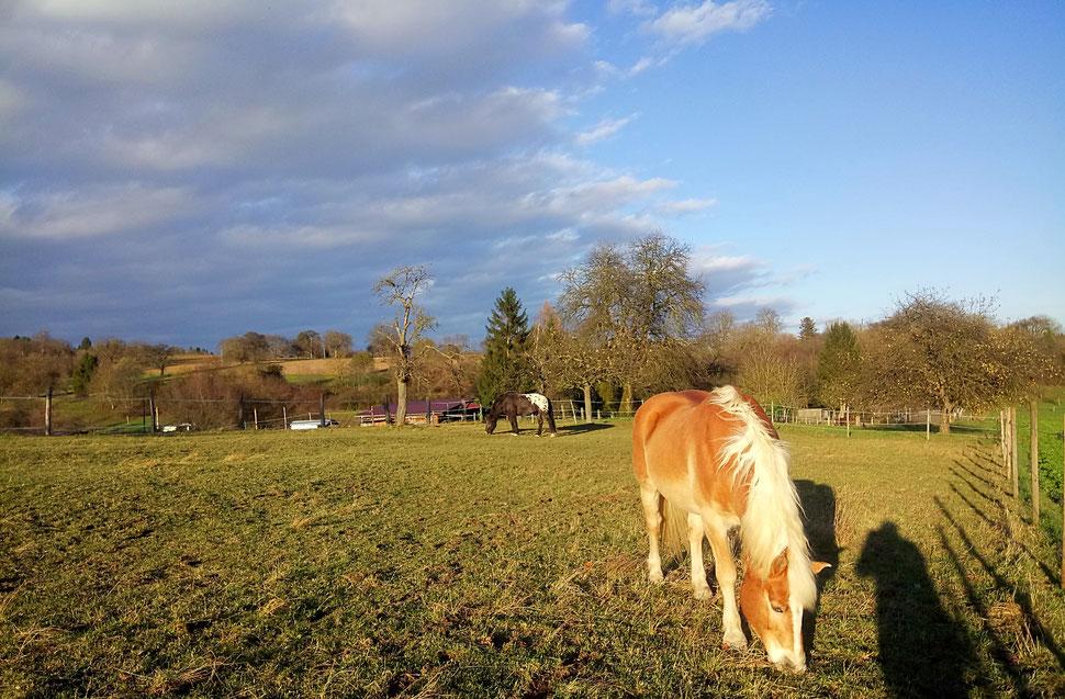 17° und Fönwind - ein laues Lüftchen im November