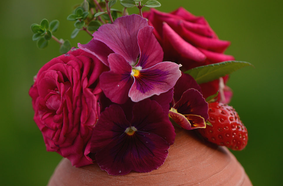 a strawberry, violas and miniature roses for in a vase on monday