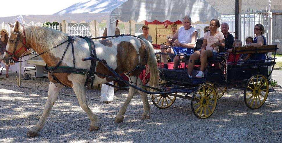 Passionné de chevaux, Edgar Vervaet s'adonne à son loisir préféré : les balades en attelage.